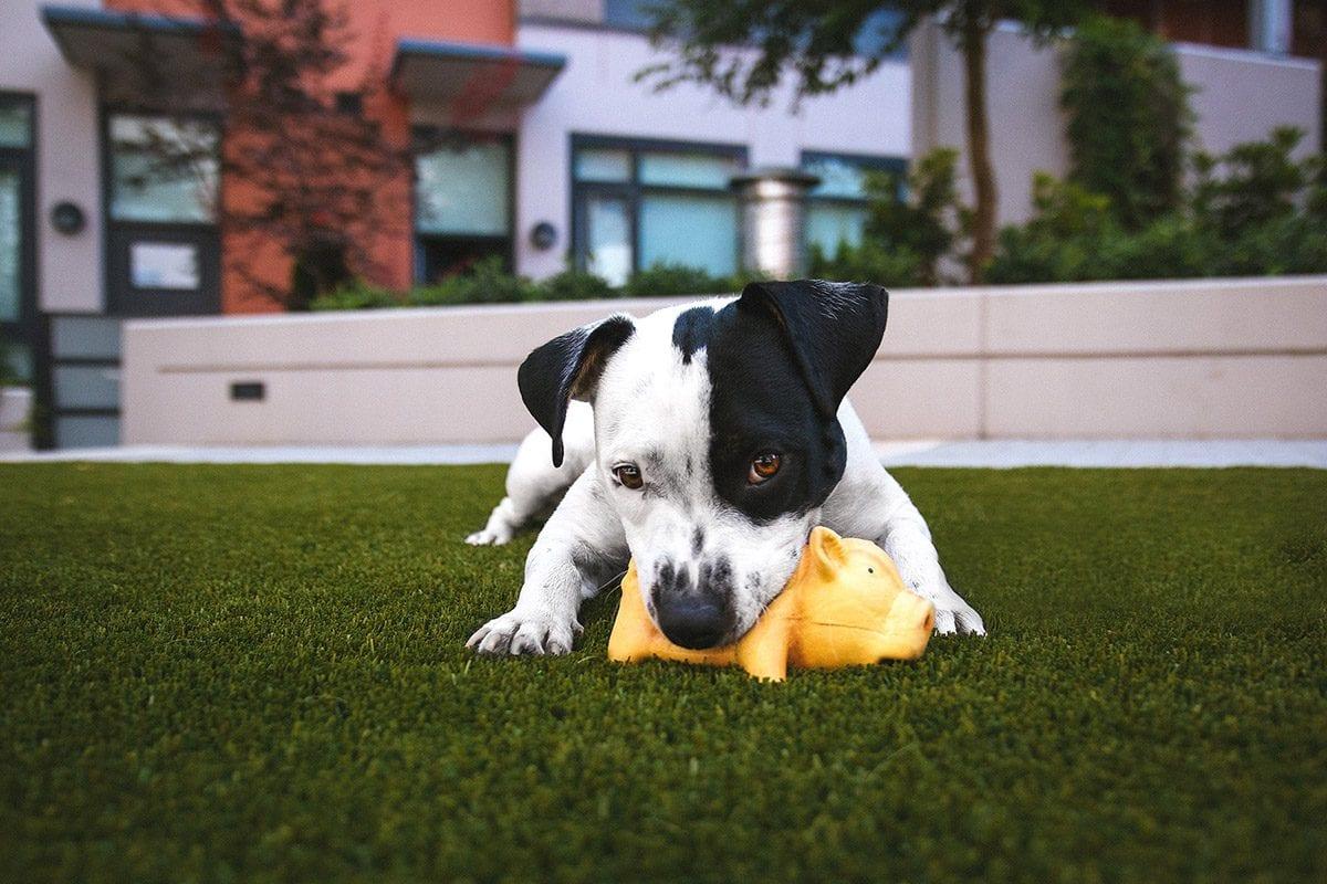 Brinquedos são grande parte da alegria diária na vida dos cães. Por isso de tempos em tempos é preciso limpar os brinquedos de forma adequada, sejam eles de pelúcia, corda, borracha, plástico ou outros materiais.