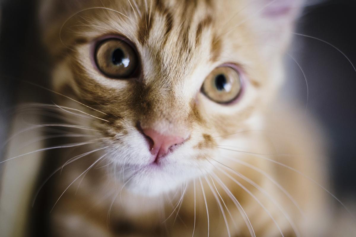 Você sabe qual é a personalidade do seu gato?