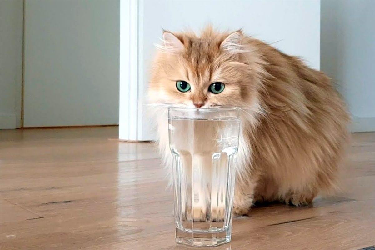 cães e gatos precisam beber água