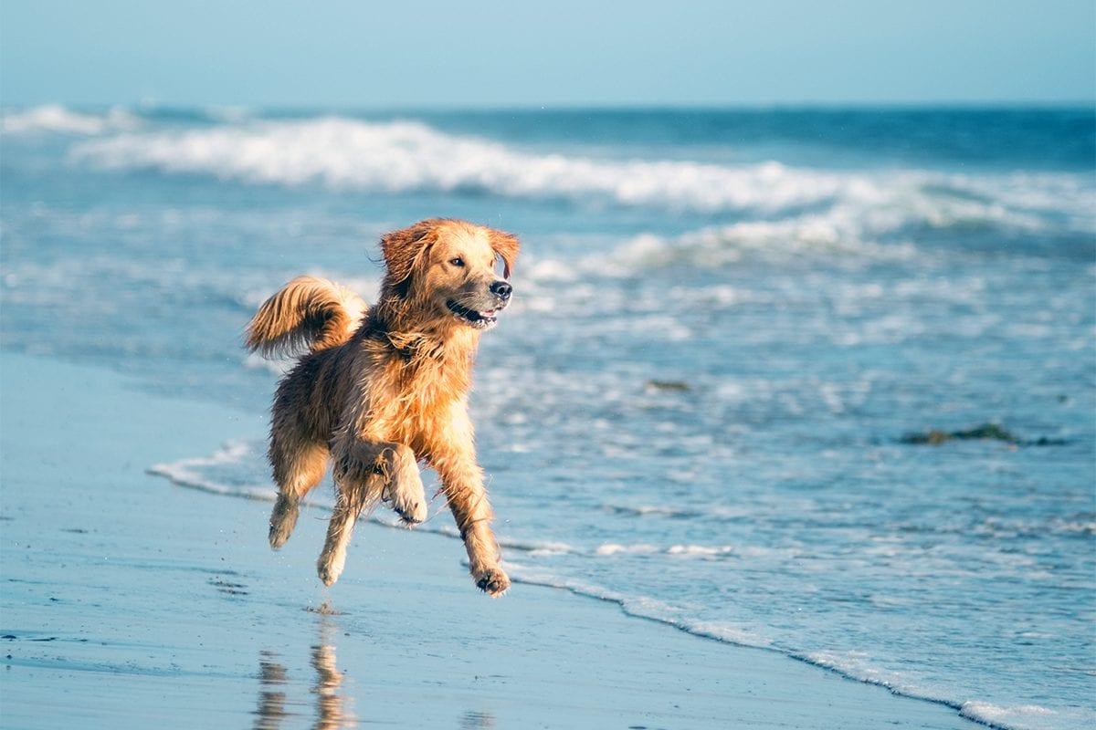cães à praia