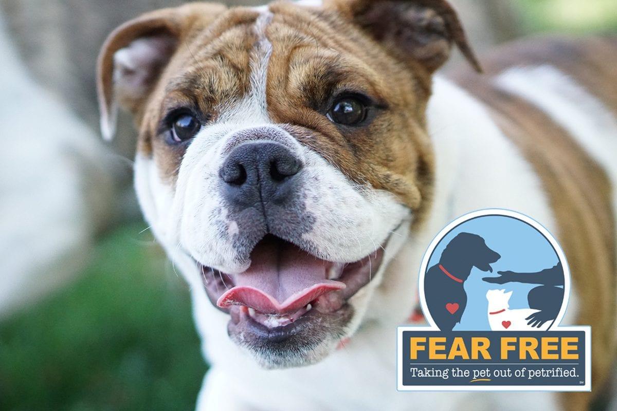 Certificação Fear Free Pets