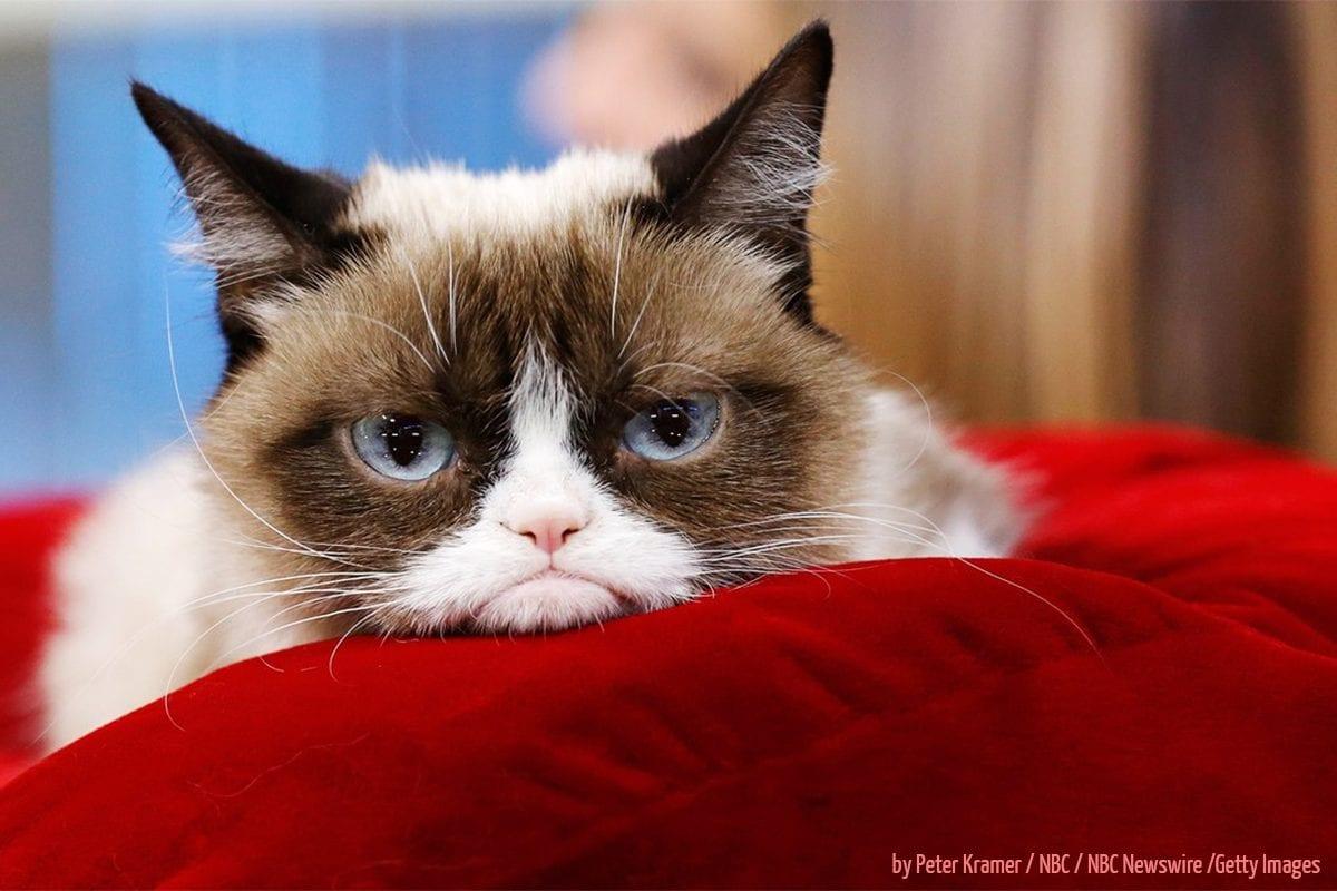 Grumpy Cat revolucionou o humor na internet