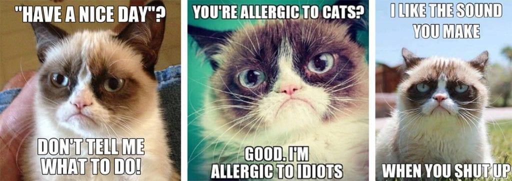 Memes de Grumpy Cat