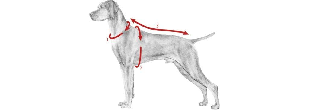 Como medir roupinhas de cães