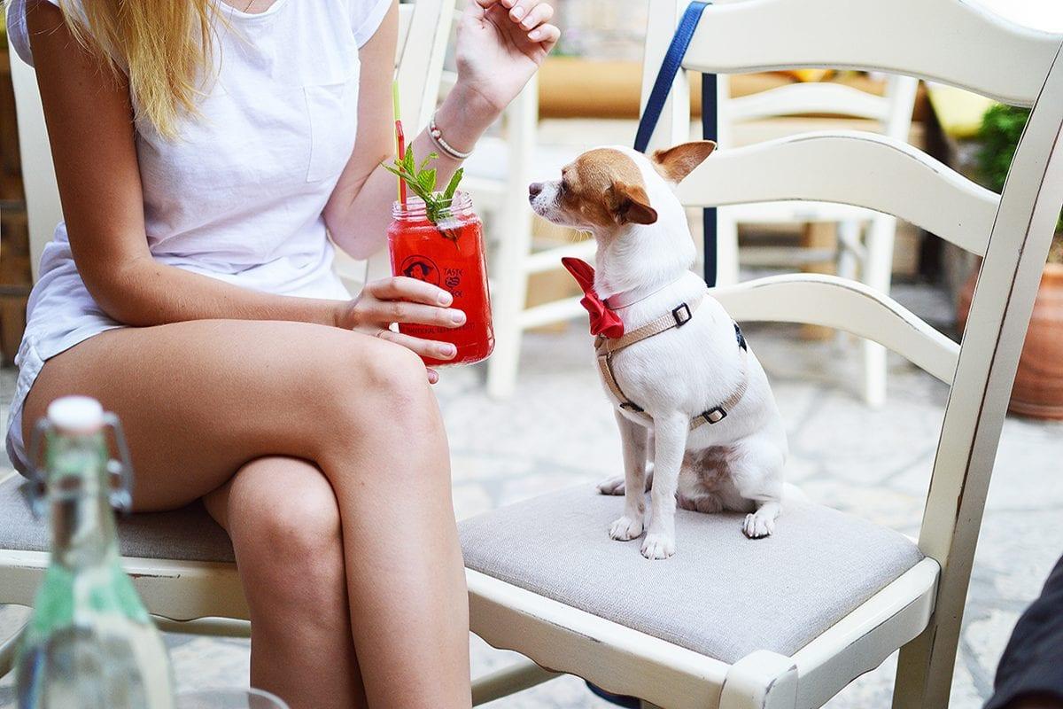 Humanização de pets