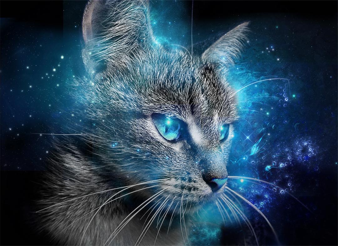 Os poderes mágicos dos gatos